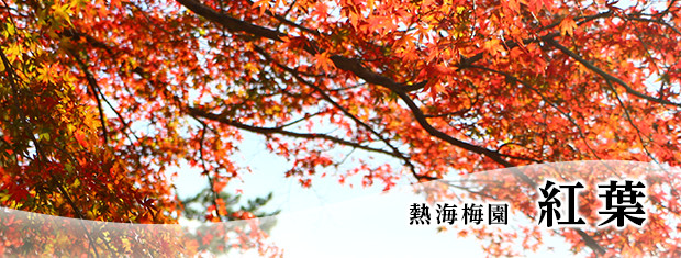 Photograph: Atami Baien colored leaves